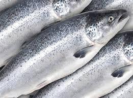 Giá cá hồi tăng cao do sản lượng đánh bắt ở Na uy suy giảm