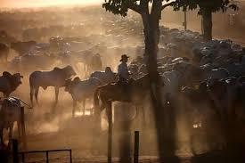 Cạnh tranh trên thị trường xuất khẩu thịt bò gia tăng do cung không đủ cầu